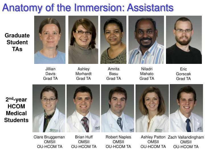 Anatomy of the Immersion: Assistants
