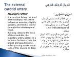 the external carotid artery11