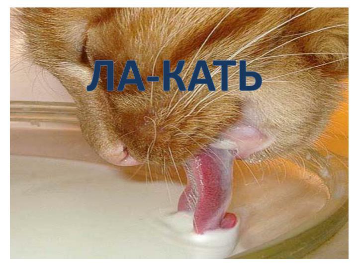 ЛА-КАТЬ
