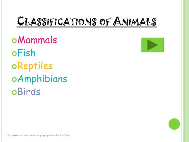 Classifications of Animals