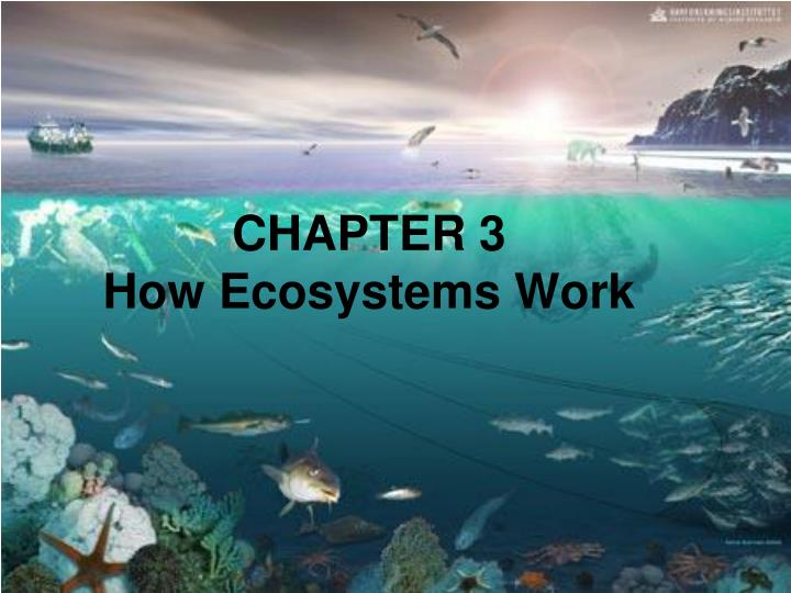 Chapter 3 how ecosystems work