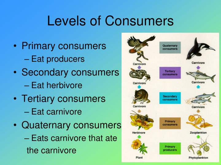 Levels of Consumers