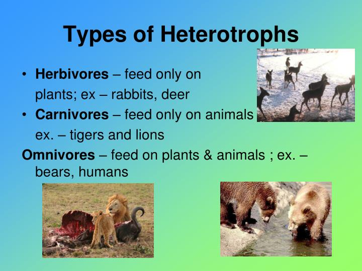 Types of Heterotrophs