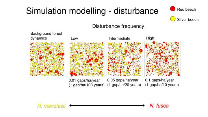 Simulation modelling - disturbance