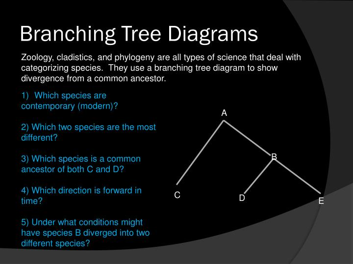 Branching Tree Diagrams