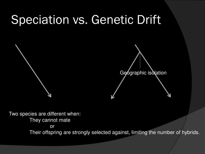 Speciation vs. Genetic Drift