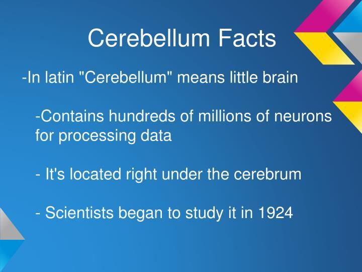 Cerebellum Facts