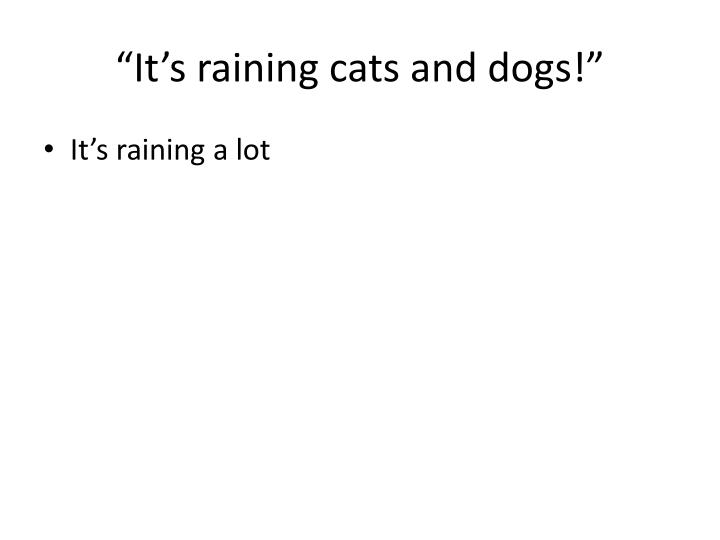 """It's raining cats and dogs!"""