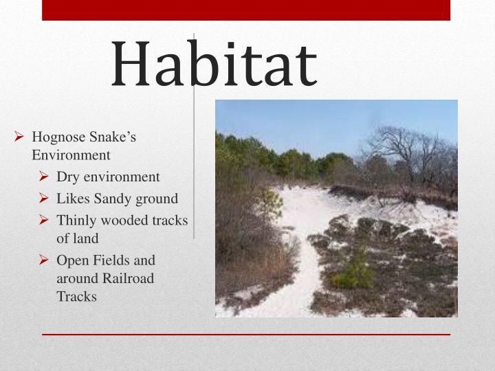 Hognose Snake's Environment