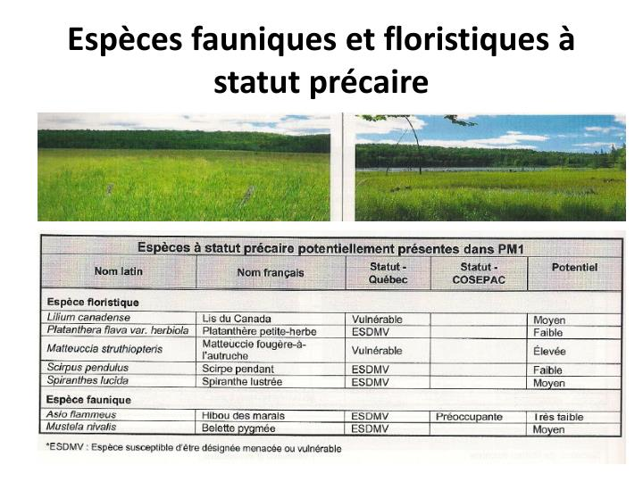 Espèces fauniques et floristiques à statut précaire
