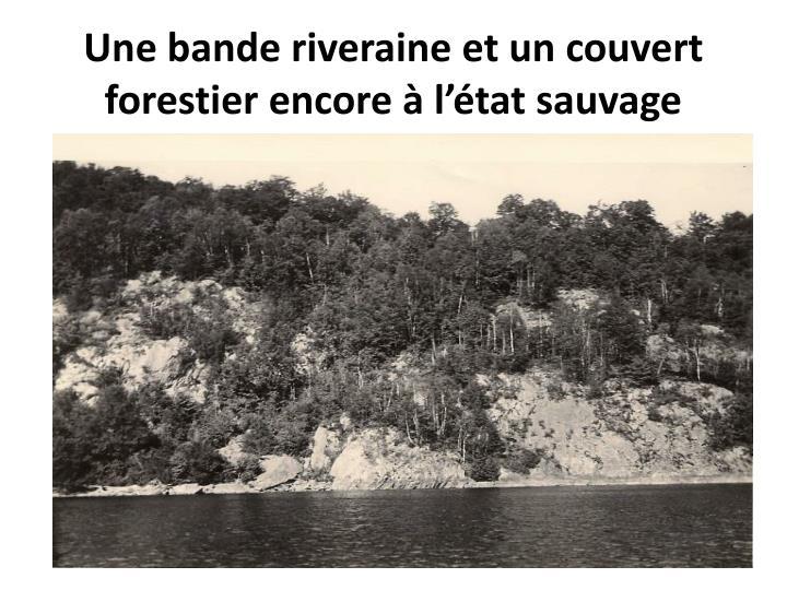 Une bande riveraine et un couvert forestier encore à l'état sauvage