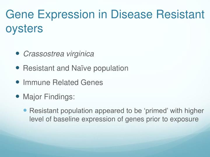 Gene Expression in Disease Resistant oysters