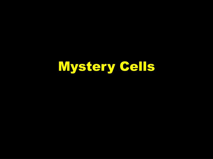 Mystery Cells
