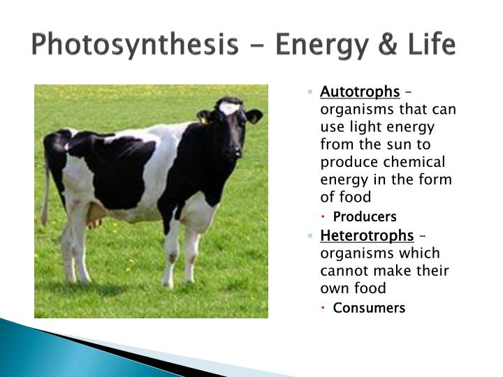 Photosynthesis - Energy & Life