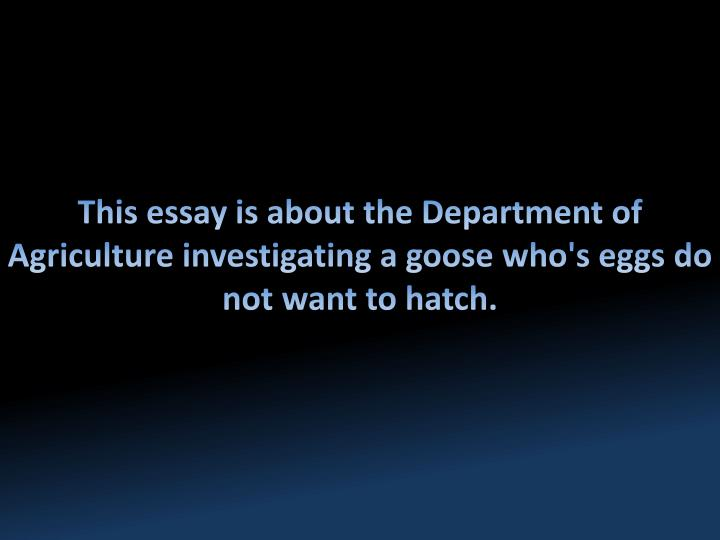 This essay is about the Department of Agriculture investigating a goose who's eggs do not want to ha...