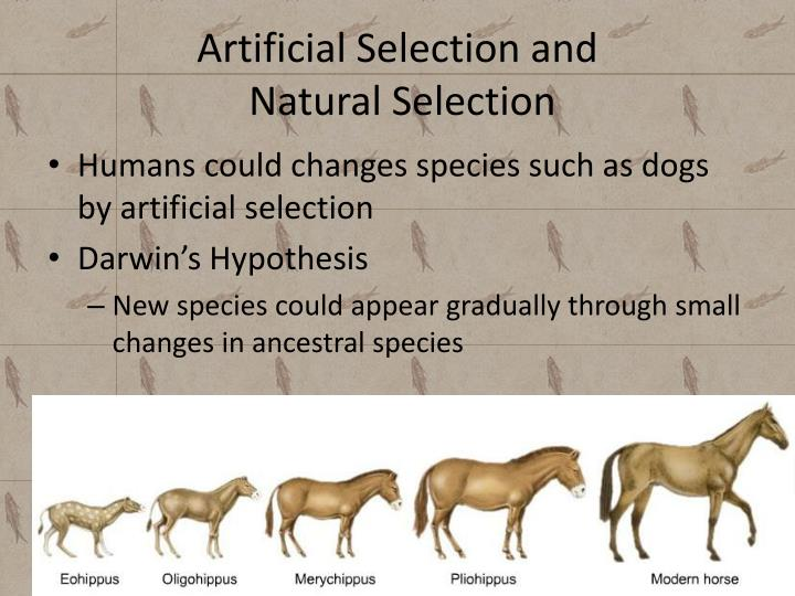 Artificial Selection and