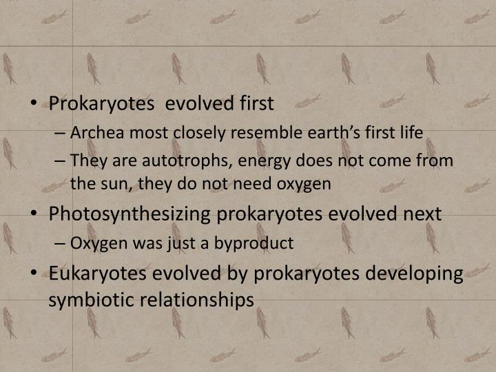 Prokaryotes  evolved first