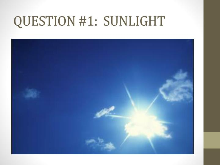 QUESTION #1:  SUNLIGHT