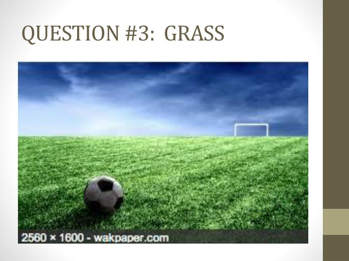QUESTION #3:  GRASS