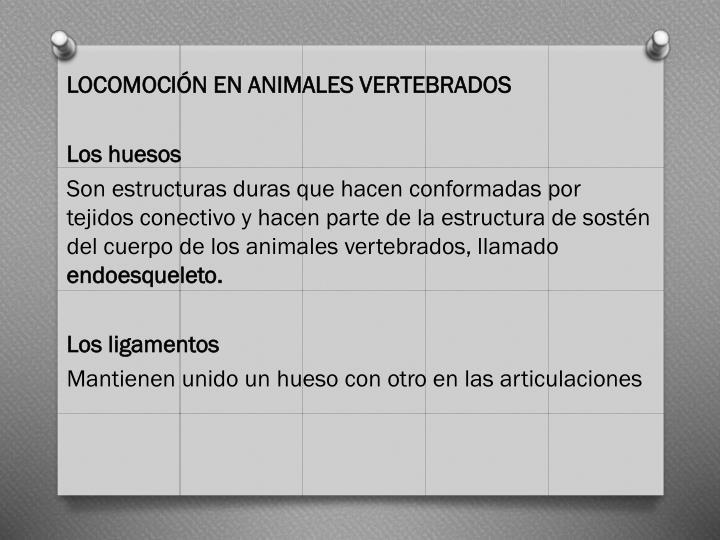 LOCOMOCIÓN EN ANIMALES VERTEBRADOS