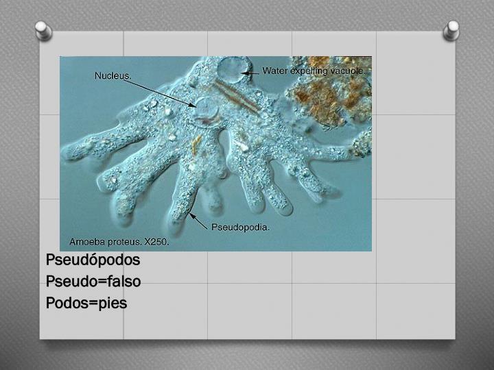 Pseudópodos