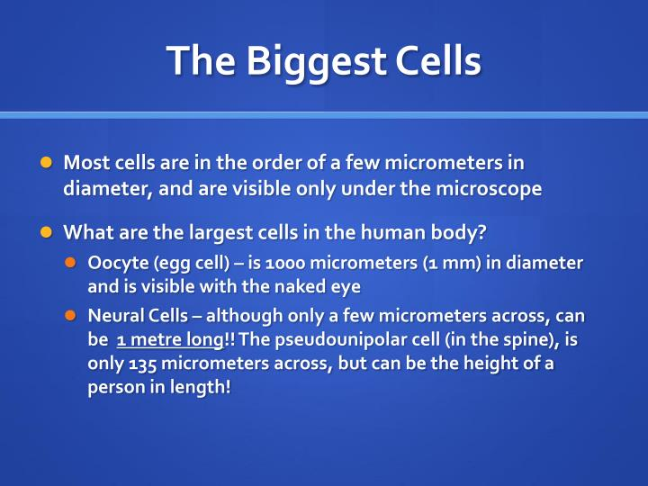 The Biggest Cells