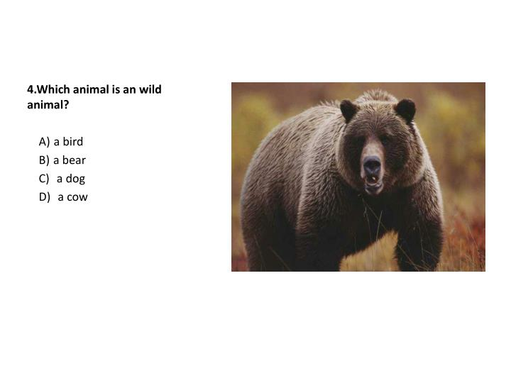 4.Which animal is an wild animal?