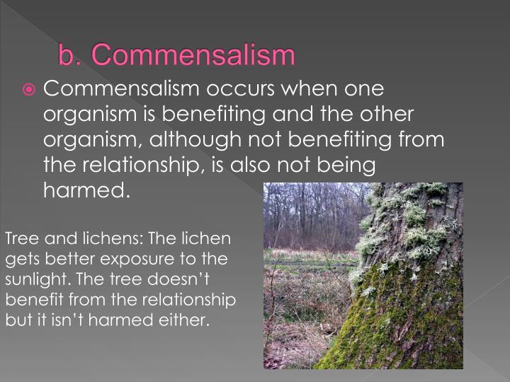 b. Commensalism