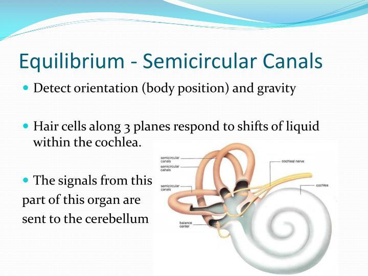 Equilibrium - Semicircular Canals