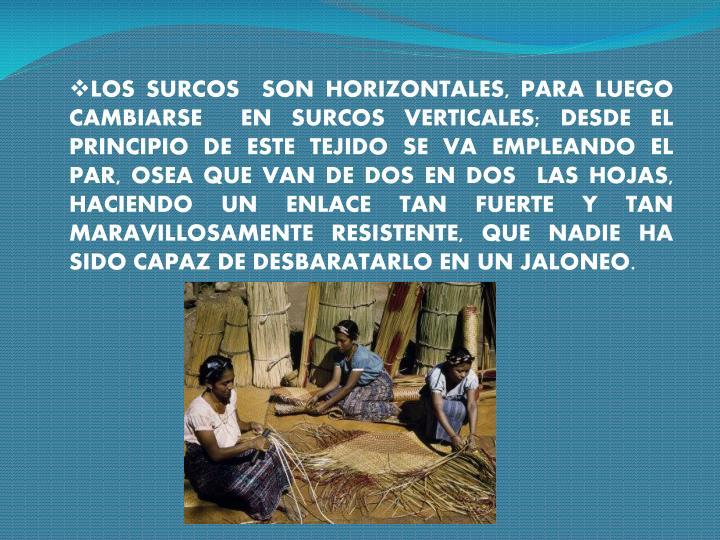 LOS SURCOS  SON HORIZONTALES, PARA LUEGO CAMBIARSE  EN SURCOS VERTICALES; DESDE EL PRINCIPIO DE ESTE TEJIDO SE VA EMPLEANDO EL PAR, OSEA QUE VAN DE DOS EN DOS  LAS HOJAS, HACIENDO UN ENLACE TAN FUERTE Y TAN MARAVILLOSAMENTE RESISTENTE, QUE NADIE HA SIDO CAPAZ DE DESBARATARLO EN UN JALONEO.