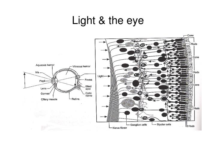 Light & the eye