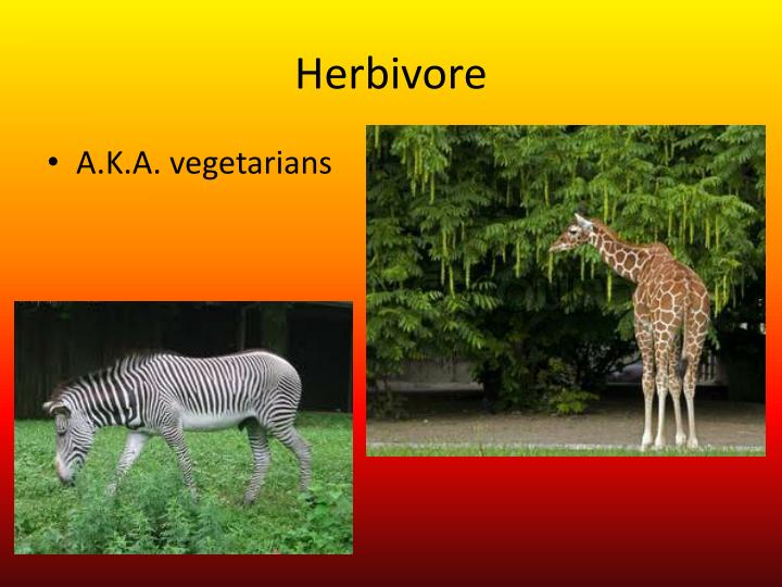 Herbivore