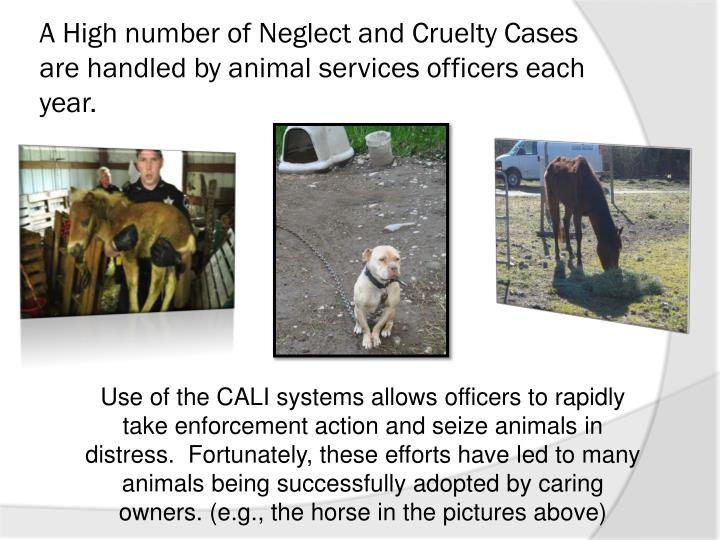 A High number of Neglect and Cruelty Cases are handled by animal services officers each year.