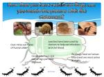 now that you have read gross bugs can you match the picture with the statement
