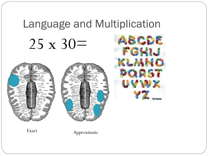 Language and Multiplication