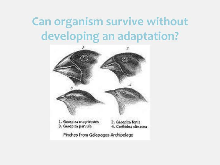 C an organism survive without developing an adaptation