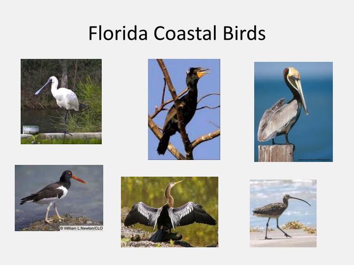 Florida Coastal Birds