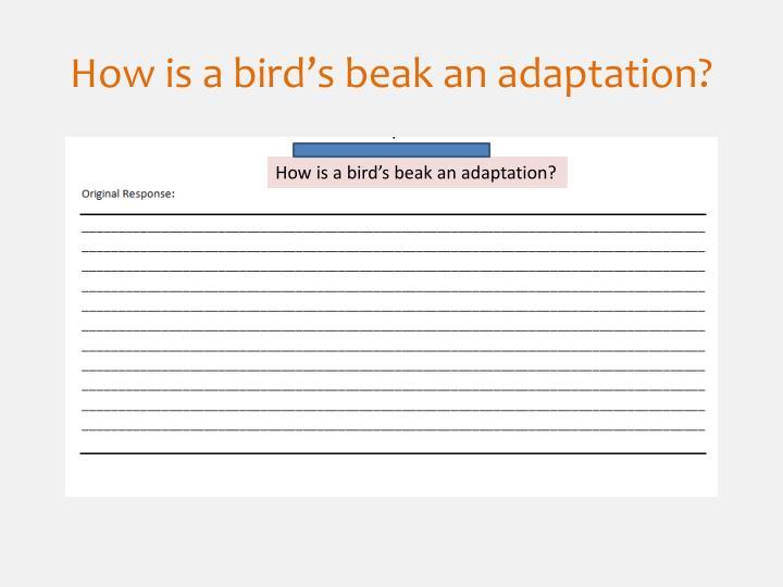 How is a bird's beak an adaptation?