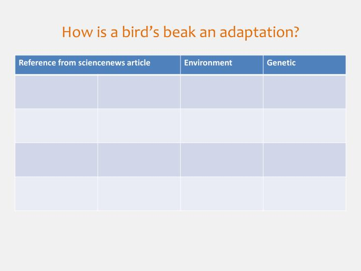 How is a bird's beak an