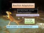 basilisk adaptation