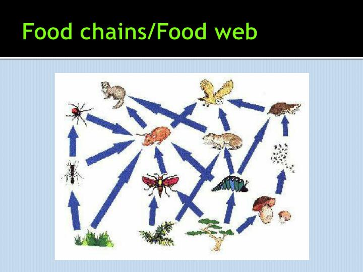 Food chains/Food web