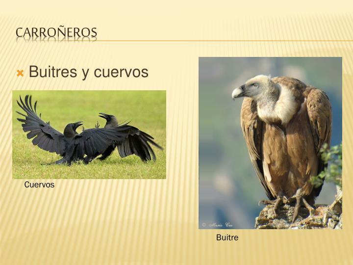 Buitres y cuervos