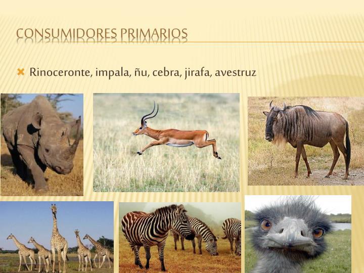 Rinoceronte, impala, ñu, cebra, jirafa, avestruz