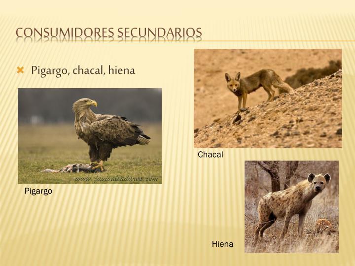 Pigargo, chacal, hiena