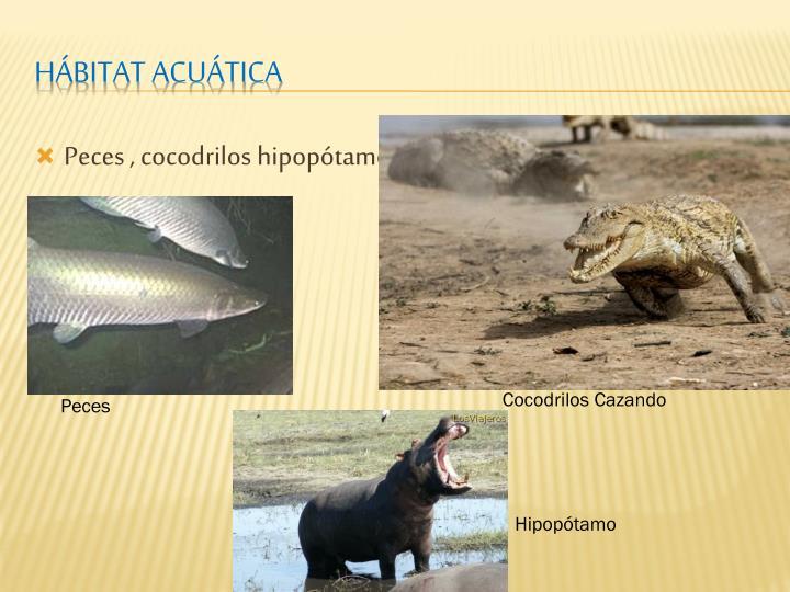 Peces , cocodrilos hipopótamos