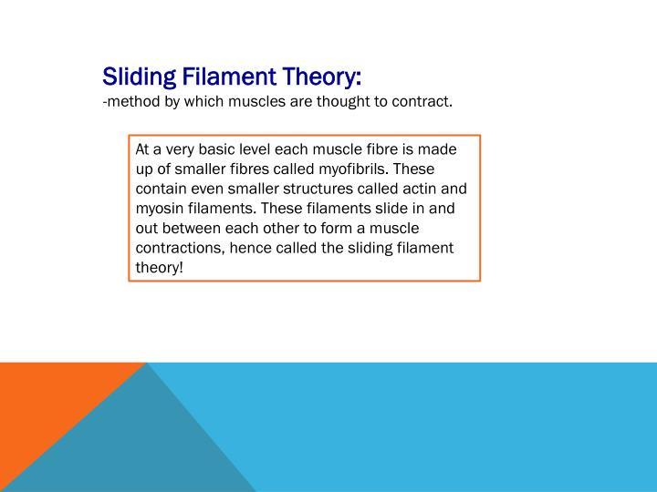 Sliding Filament Theory: