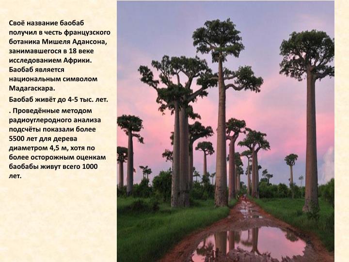 Своё название баобаб получил в честь французского ботаника Мишеля
