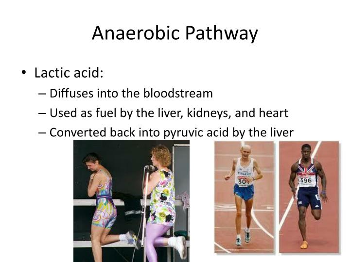 Anaerobic Pathway