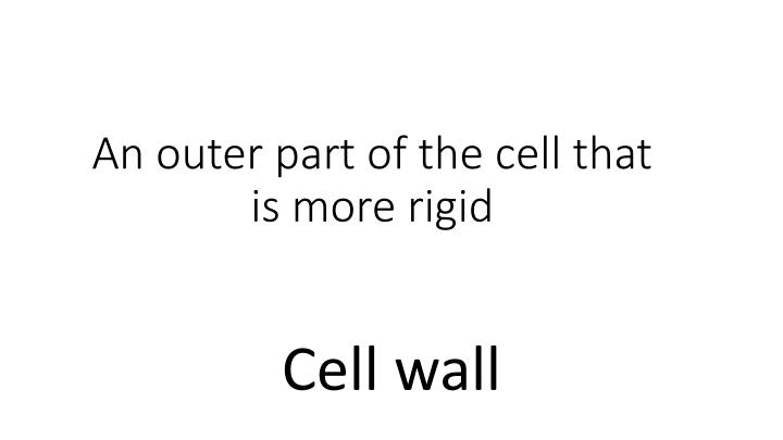 An outer part of the cell that is more rigid