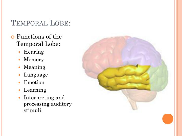 PPT - Somewhere . . . Over the brainbow . . . PowerPoint ...